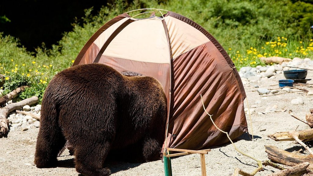 Bear in Campsite, Howcast