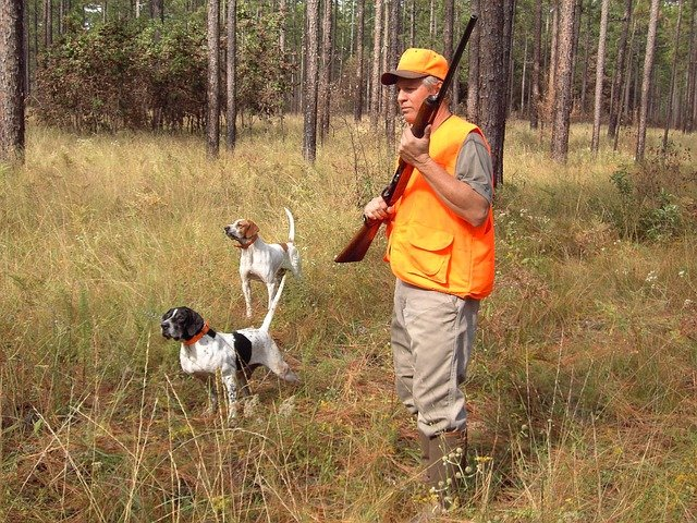 Hunter with dogs and shotgun