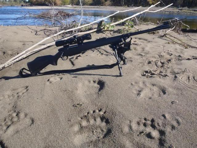 weatherby mark v near bear tracks