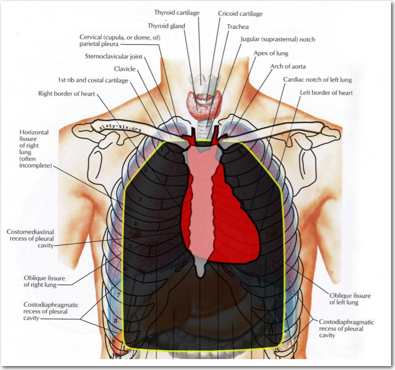 Body Armor Anatomy