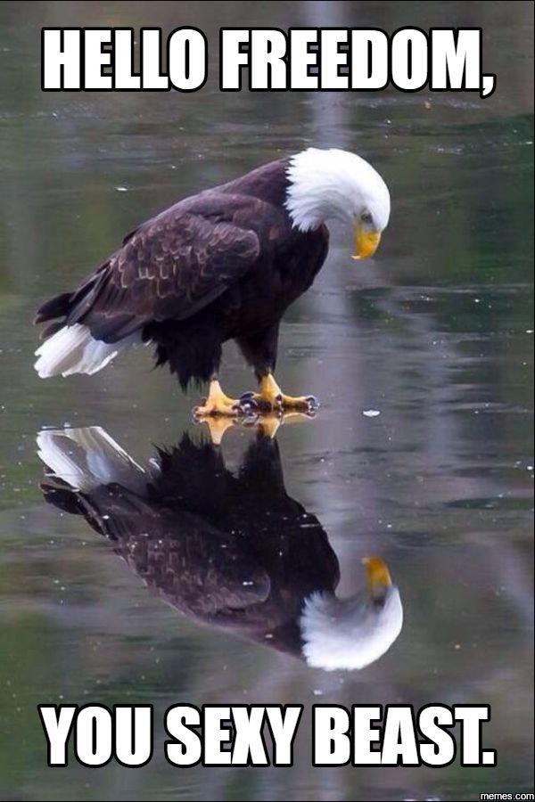 hello freedom