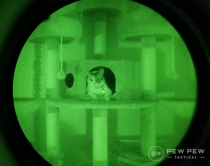 Night Vision Cat