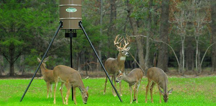 Deer being fed