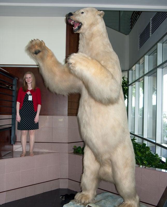 12 foot polar bear killed with a .44 mag