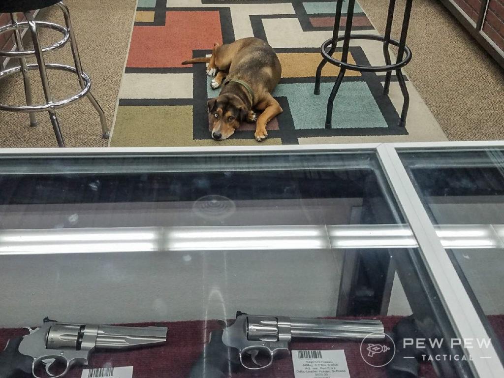 Meet Zeke. Personally I think shop dogs legitimize gun stores big time.