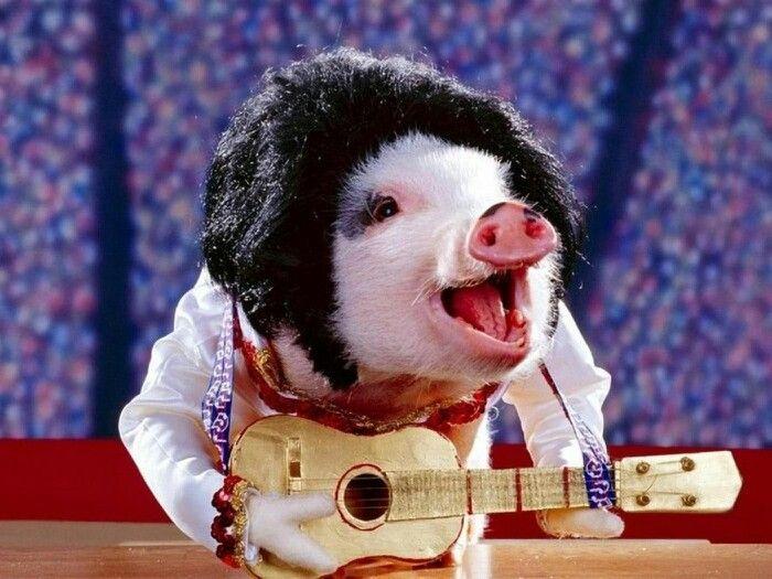 rock n roll pig