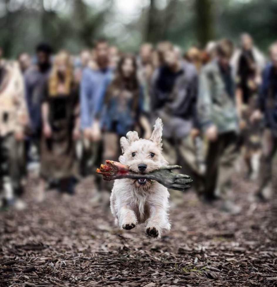 Dog with zombie arm