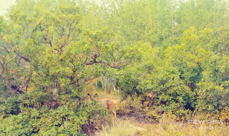 Elk Hunting Deer