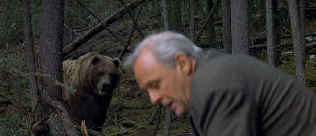 The Edge Bear