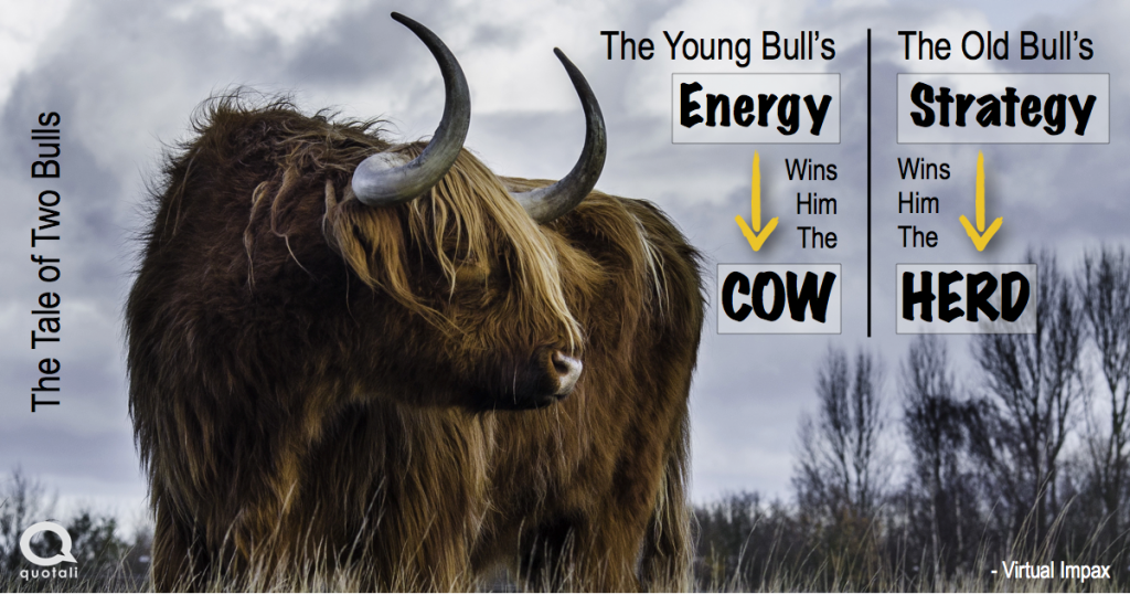 Old Bull Young Bull