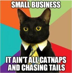 small business cat meme